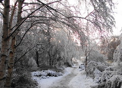 winter Path (Ian Robin Jackson) Tags: trees sky white ice scotland colours aberdeenshire path wintry drumoak