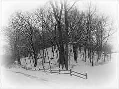 Happy Fence Friday...with snow  {Explored} 01-09-2016 (novice09) Tags: trees winter rural fence countryside woods hff ipiccy