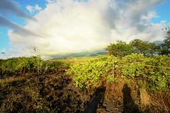 our shadows (heartinhawaii) Tags: light nature clouds hawaii lava afternoon shadows maui foliage haleakala magichour lateafternoon earlyevening lavarocks dramaticlight ahihicove southmaui nikond3300 mauiinnovember ahihinaturereserve