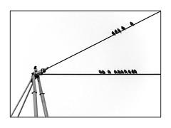 Der Fremde  /  Die Fremden (Panasonikon) Tags: vögel linien lines minimalismus panasonikon bw fremde strangers birds sw panasonic dmcfz200