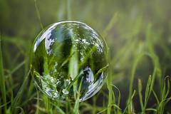 IMG_1181 (Anna-Riitta O) Tags: light reflection green grass bubbles bubble annariitta ovaska