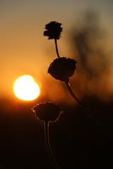 Sunset flowers (or micro nature) (Yannis Raf) Tags: sunset orange nature golden bokeh figures contrasts direct cirpol micronature bokehshapes naturespallete eos70d efs18135f3556isstm