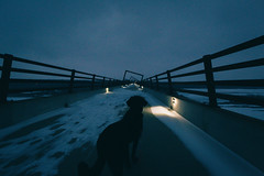 Cortana on the Bridge (Tony Webster) Tags: madrid bridge winter sunset dog snow night lights us neon unitedstates dusk iowa led leds woodward bluehour atnight lighted bluelights litup boonecounty uprr cortana desmoinesriver desmoinesrivervalley centraliowa hightrestletrail hightrestlebridge hightrestletrailbridge hightrestle