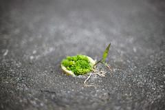 DSC00922c2 (haru__q) Tags: world plant ar sony small konica a7  hexanon