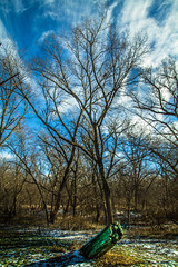 Wilderness (vinnothkrishnan) Tags: trees sky art nature colors clouds midwest experiment atmosphere wilderness
