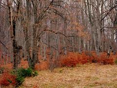 Autumn forest (Stella VM) Tags: autumn trees mountain forest landscape bulgaria       kladnitsa