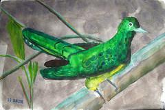 Draw Birds (IrinaIrina) Tags: birds fauna watercolor sketchbook