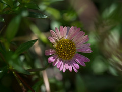 _-2.jpg (JenniferChadwick) Tags: flowers macro home
