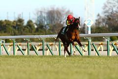 Where are my rivals? (shiba.shuji) Tags: horse tokyo racing