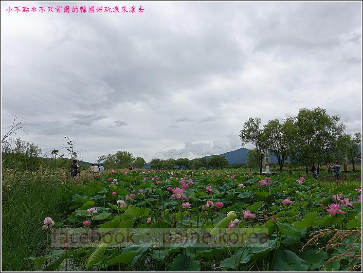 京畿道 兩水頭 洗美苑 (110).JPG