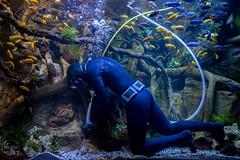 new exhibit   loro parque (John FotoHouse) Tags: fish color colour flickr fuji tenerife diver canaries puertodelacruz johndolan 2016 dolan leedsflickrgroup johnfotohouse copyrightjdolan fujifilmx100s