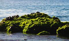 Praia, Cabo Verde (Tude e Joo) Tags: sea seaweed praia rock atlanticocean pedra caboverde alga capeverde capvert oceanoatlantico algasmarinhas ilhadesantiago santiagoisland quebracanela