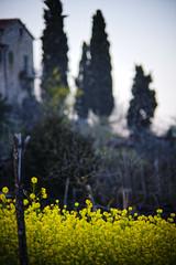 Mellow, Yellow 1967 (S. Hemiolia) Tags: yellow zeiss country hills 180 giallo tuscany olympia dxo toscana manualfocus f28 colline collina arezzo valdarno sonnar 180mm cipressi cennina d700 valdambra