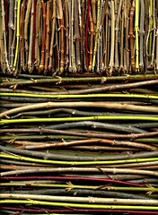 57252.01 twigs (horticultural art) Tags: stems buds twigs branchtips horticulturalart