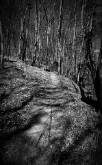 Into the woods (Adi Berger Photo) Tags: trees blackandwhite bw forest romania sovata mures sonya6000 sonyilce6000