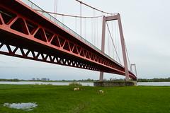 Rijnbrug bij Emmerich (Werner Willemsen) Tags: bridge emmerich rheinbrucke rijnbrug