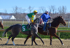 "2016-01-03 (38) r3 Jevian Toledo on #5 More Stormyweather (JLeeFleenor) Tags: photos photography md marylandhorseracing marylandracing laurelpark jockey جُوكِي ""赛马骑师"" jinete ""競馬騎手"" dżokej jocheu คนขี่ม้าแข่ง jóquei žokej kilparatsastaja rennreiter fantino ""경마 기수"" жокей jokey người horses thoroughbreds equine equestrian cheval cavalo cavallo cavall caballo pferd paard perd hevonen hest hestur cal kon konj beygir capall ceffyl cuddy yarraman faras alogo soos kuda uma pfeerd koin حصان кон 马 häst άλογο סוס घोड़ा 馬 koń лошадь maryland"