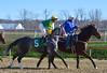 "2016-01-03 (38) r3 Jevian Toledo on #5 More Stormyweather (JLeeFleenor) Tags: photos photography md marylandhorseracing marylandracing laurelpark jockey جُوكِي ""赛马骑师"" jinete ""競馬騎手"" dżokej jocheu คนขี่ม้าแข่ง jóquei žokej kilparatsastaja rennreiter fantino ""경마 기수"" жокей jokey người horses thoroughbreds equine equestrian cheval cavalo cavallo cavall caballo pferd paard perd hevonen hest hestur cal kon konj beygir capall ceffyl cuddy yarraman faras alogo soos kuda uma pfeerd koin حصان кон 马 häst άλογο סוס घोड़ा 馬 koń лошадь maryland"
