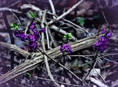 Primavera nel sottobosco (civetta delle nevi) Tags: primavera piemonte langhe sottobosco