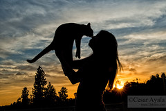 Love Cats - 05-April-2016 (Cesar - 32photos) Tags: california sunset cats animals silhouette cat nikon silhouettes dramatic kitty sharp kitties nikkor dramaticsky tones neptune d800 lovecats animalportrait catpicture catpictures neptunethecat californiasunset nikond800