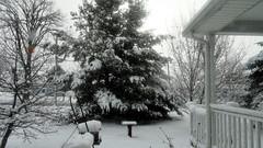 Looks Like Winter Through My Window (joeldinda) Tags: snow tree home weather yard birdbath michigan sony feeder cybershot porch april hook mulliken sonycybershot crook 2016 pocketcam shepherdscrook 3099 sonydsch55 dsch55 20160409taffywithboxaprilsnowcybershotjpg93099