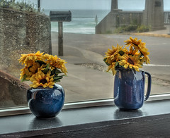 16-06784.jpg (kgsix) Tags: ocean flowers usa oregon us unitedstates newport nyebeach lincolncounty photomatix5