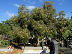 20160331-IMG_0994.jpg (High Beach) Tags: people cemetery jane australia places western wa benjamin tucker westernaustralia oceania occupations plater torpy karrakatta karrakattacemetery benjamintucker torpyjane tuckerbenjamin janetorpy