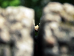 Small stone in the slot (Lukinator) Tags: light macro nature rock stone wall licht bokeh small natur den mini finepix schlitz fujifilm slot makro stein unscharf kleiner mauer unsharp hs20 gestein makros kleinen lukinator