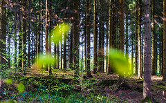 """Fireflies"" (neerod81) Tags: trees leaves forest fun flying movement wind surreal windy blurred dreamy wald dynamics stormyweather fireflies fliegendebltter"
