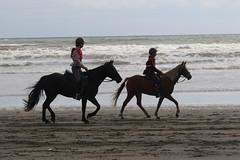 IMG_EOS 7D Mark II201604032285 (David F-I) Tags: horse equestrian horseback horseriding trailriding trailride ctr tehapua watrc wellingtonareatrailridingclub competitivetrailriding sporthorse equestriansport competitivetrailride april2016 tehapua2016 tehapuaapril2016 watrctehapuaapril2016
