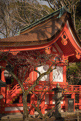 20160302-084557_5K_80 (pya) Tags: kyoto  kitano  tenmangu