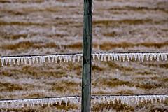 DSC_1093_136 (Jeffery A. Smith) Tags: ice fence nikon icestorm northdakota barbwire freezingrain fenceline bottineau d3300