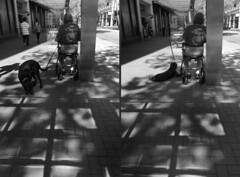Semper Fido (goofcitygoof) Tags: dogs walkers