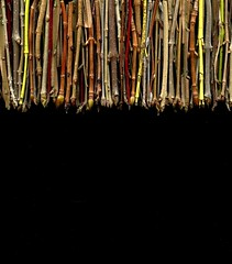 57251.01 twigs (horticultural art) Tags: curtain line buds twigs branchtips horticulturalart