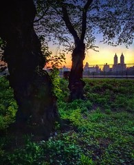 Springtime in New York 26 (Jim Lambert) Tags: nyc newyorkcity trees sunset usa ny newyork skyline us unitedstates centralpark manhattan silhouettes upperwestside springtime 2016 jacquelinekennedyonassisreservoir theeldorado instagram ifttt spring2016 24april2016 april242016 owsskyline