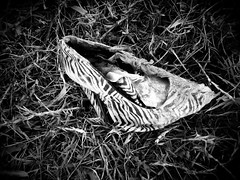 Laguna De Xilo (chicitoloco) Tags: lagune mist lake trash see garbage junk basura nicaragua laguna waste managua mll trdel abfall unrat plunder kram schutt ramsch schund wegwerfgesellschaft xilo hinterlassenschaften abfallstoffe trashsociety
