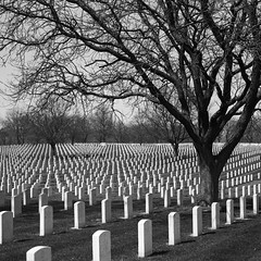 Wood National Cemetery (James Feller) Tags: d76 woodnationalcemetery pentax67ii ilforddelta100pro epsonv750 tf5 smc105mmf24