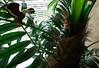 Watch out, smurf ! (Mona Monday (CThomsen)) Tags: eagle outdoor adler smurf schlumpf dschungel djungel