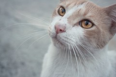 Kitty (cynthiaphoto) Tags: pink cats animal animals yellow cat nose kitten feline kitty whiskers whisker kitties stare meow cateyes cateye