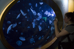 jellyfishes on screen (vimad97) Tags: trip people travelling water valencia canon eos aquarium is jellyfish persone round acqua medusa acquario oceanografic ovale viaggiare 18135 550d