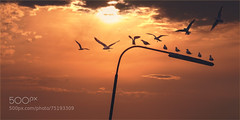 Seagulls 02 - The 70's (l3v1k) Tags: sunset sky sun seagulls lamp birds flying post peaceful retro romantic 500px ifttt