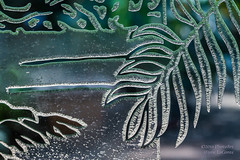 Dome Door (PhotoArtMarie) Tags: green glass leaf etching pattern