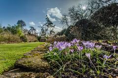 DSC_0025.jpg (Peter Connell) Tags: flowers england sky landscape europe wiltshire intothesun mauveflowers thecourts shortgrass fieldsopenareas partbluepartcloud