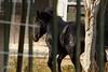 Black Horse (josmiz76) Tags: horse naturaleza black nature animal familia canon caballo navidad primos negro animales nadal nochebuena 2015 sobris galope papanoel equestre josmiz