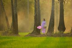 Portrait of Vietnamese Girl Traditional dress (SaravutWhanset) Tags: china travel light sunset summer woman sunlight tree green love girl field thailand dress rice smoke traditional vietnam thai ricefields relex portriat rimlight frashion jouner