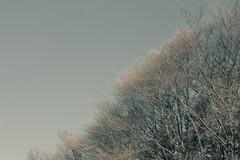 Raureif an Baum