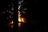 Evergreen Sunset (Joseph Eckert) Tags: statepark park trees winter sunset sun tree st set zeiss forest one washington woods nikon state 9 apo edward evergreen pro wa f2 capture washingtonstate 135mm c1 sonnar stedward zeiss135mm zeiss135mmf2 zf2 d800e zeiss135mmapo captureonepro9