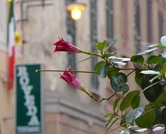 impressioni a Finale Ligure (fotomie2009) Tags: italy roma lamp italia flag liguria via fiori finale lampione bandiera ligure