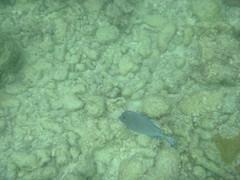 P1020622 (ericvdb) Tags: statepark snorkeling floridakeys keylargo johnpennekamp