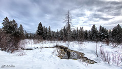 Evergreen (RH Miller) Tags: trees winter usa snow landscape wyoming pinetrees grandtetonnationalpark reedmiller rhmiller